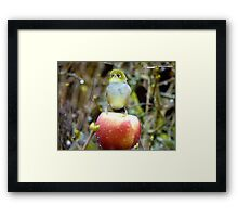 Geeez..It's Freeeezing Out Here!!! - Silvereye - NZ Framed Print