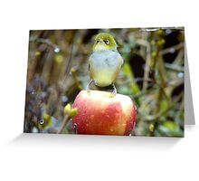 Geeez..It's Freeeezing Out Here!!! - Silvereye - NZ Greeting Card