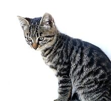 Tabby or not Tabby....That is the question by michelleduerden