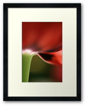 Red Tulip by Claire Armistead