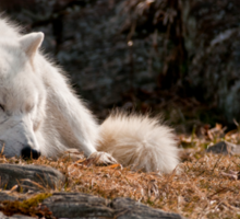 Sleeping Arctic Wolf Sticker