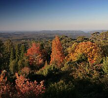 Autumn Mt. Tomah Blue Mountains NSW by MiImages