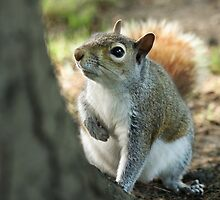 Inquisitive by Lucy Hollis
