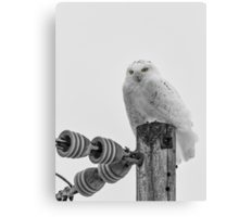 The Power Of The Owl Black and White Canvas Print