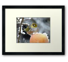 Geeeezzz!! Guess What I Woke Up To This Morning! - Wax-Eye - NZ Framed Print