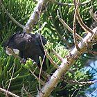 Black Cockatoo by Margaret Stanton