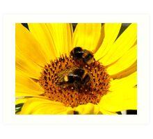 Many Hands Make Light Work!! - Bumblebees - NZ Art Print
