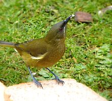 I'm Offering A Big Crumb...Any Takers!!!! - Bellbird - NZ by AndreaEL