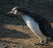 Penguin #3 by Helen Patmore