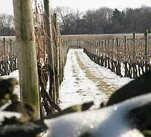 Winter Vineyard by Nichole Schoff