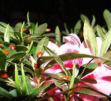 Ladybug FRENZY, La Mirada, CA USA by leih2008