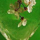 Glass of blossom by shaz4