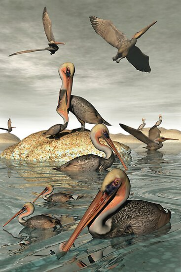 Pelican Cove by Lisa  Weber