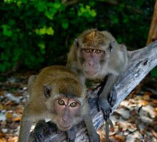 Lucky Monkeys in Paradise by Robert Mullner
