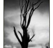Fruitful Imagination by DeeprBlue