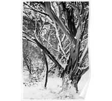 Snowgums in Snow BW Poster