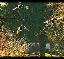 Flying Flock by DeeprBlue