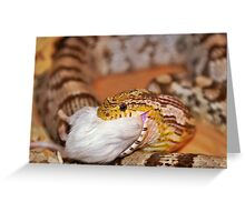 A Corn Snake Eating A Mouse Greeting Card
