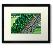 A Tree Half Covered In Ivy With Blurred Background Framed Print