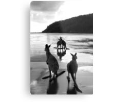 Kangaroos at Sunrise Metal Print