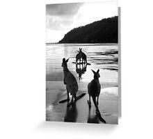 Kangaroos at Sunrise Greeting Card