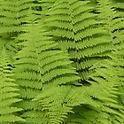 Ferns Fairway by jenndes