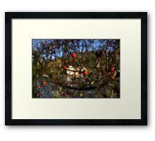 Red Berries in Winter Framed Print