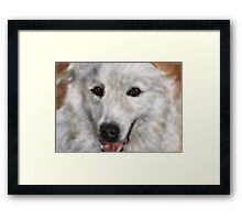 Great Pyrenees Framed Print
