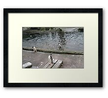 I could fly if I wanted to Framed Print