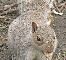 A Squirrel With A Monkey Nut by AARDVARK