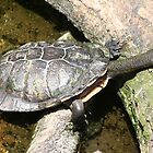 Long Neck Turtle by sassey