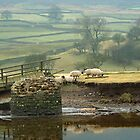 Reeth Swingbridge, Swaledale, 2001 by Steve Arkleton