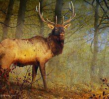 aspen forest bull elk by R Christopher  Vest