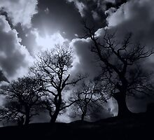 Abbey Trees, Shap by Richard Ion