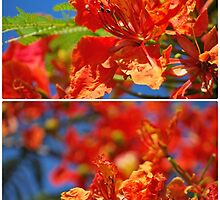 Colours Of Summer by tropicalsamuelv
