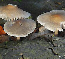 tree stump fungus by westie71