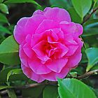 Camellia by Marylamb