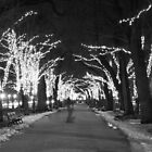 Boston - Commonwealth Avenue by James Hughes