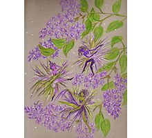 french lilacs Photographic Print
