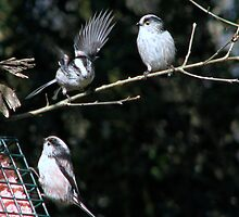A group of tits by Sharon Perrett