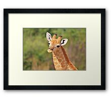 Giraffe - African Wildlife - Innocence is Adorable Framed Print