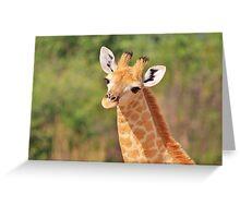 Giraffe - African Wildlife - Innocence is Adorable Greeting Card
