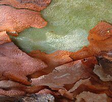 bark beauty abstract by picketty