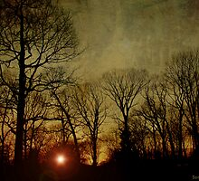 Last Rays by Sonja Svete