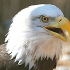 Eagle Close Up by Jim Caldwell