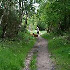 Summer Walk by conradhoe
