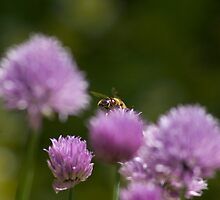 Busy bee by kevomanno