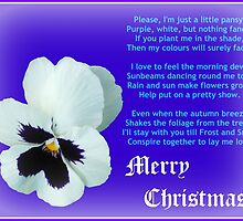 A Flower for Christmas - for all my RedBubble Friends by kathrynsgallery