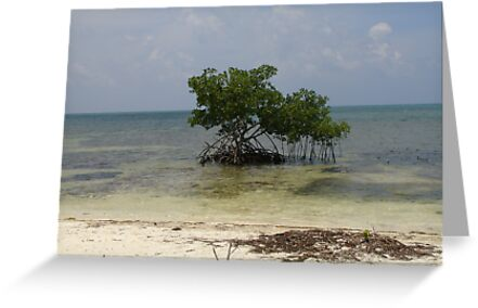 Lone Mangrove Tree by Cathy Jones