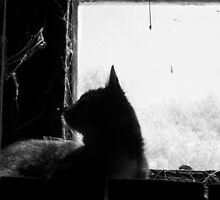 Window Cat by taylorhouse